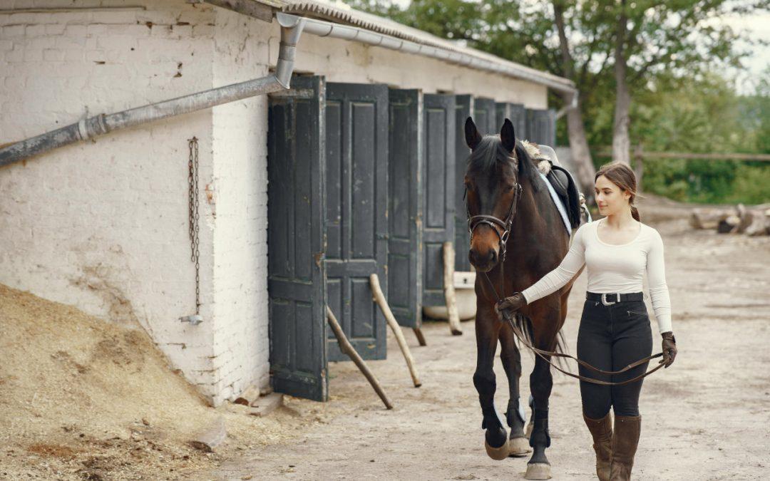 Rodzaje podłoża do boksów z końmi.